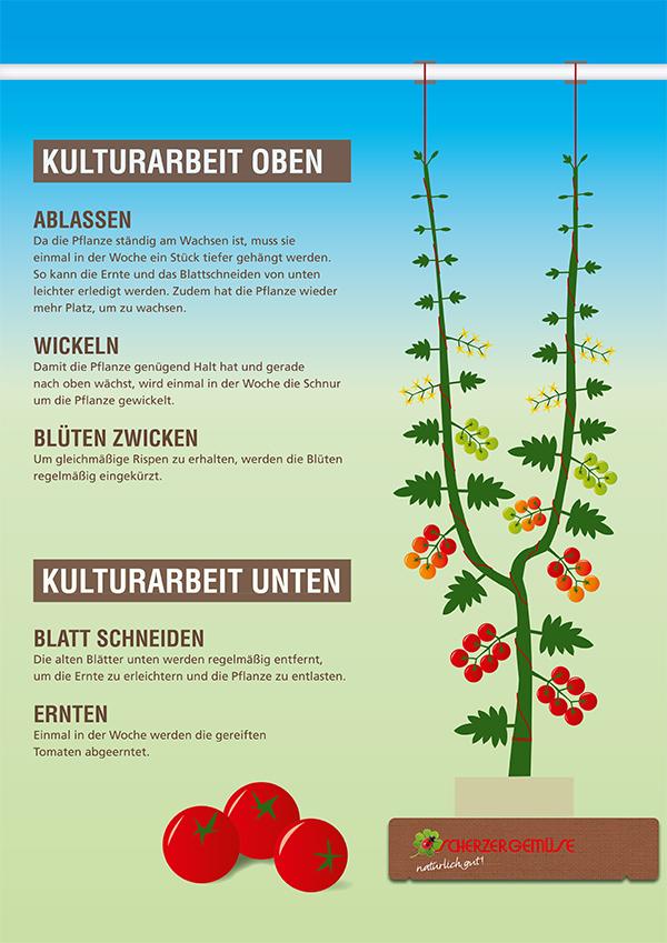 Scherzer Gemüse Kulturarbeit